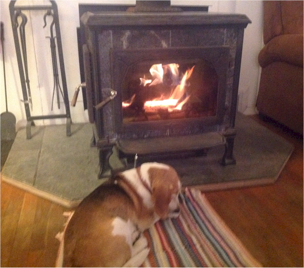 Bagel the Beagle likes a Good Fire in a Clean Wood Stove.
